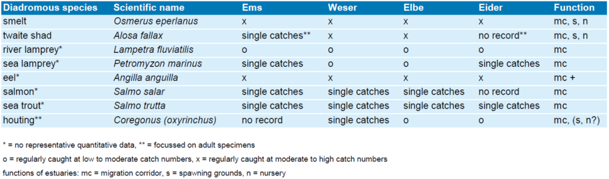 Recordings of diadromous species in the Ems, Weser, Elbe and Eider.