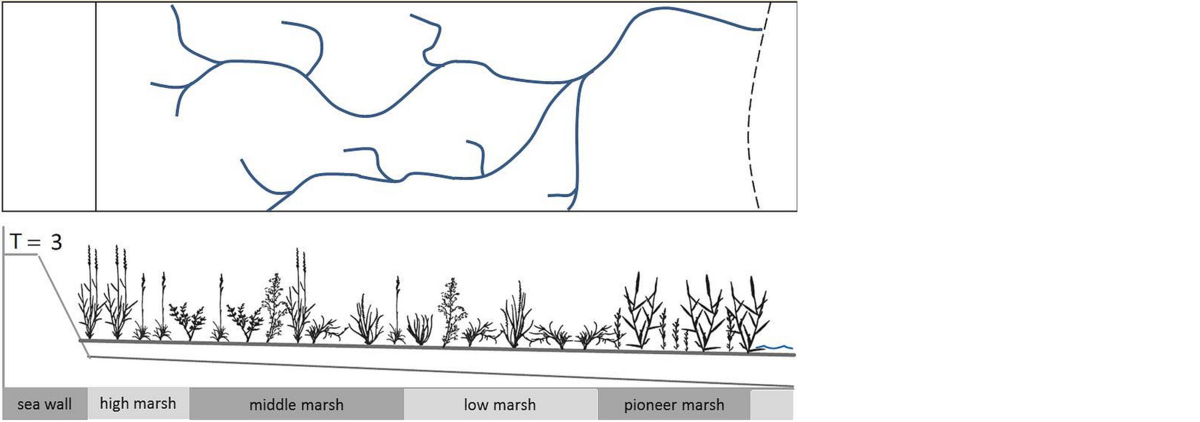 Conceptual model of the development of a mainland salt marsh, and creek development