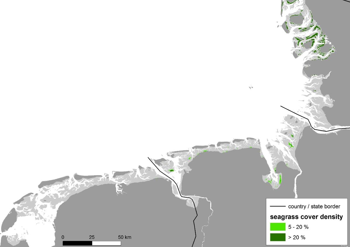 The spatial distribution of the seagrass beds in the southwestern and central Wadden Sea